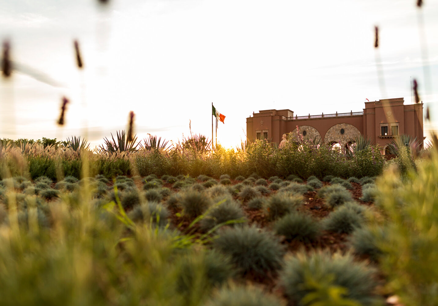 """DESC: PROJECT: IMAGE LIBRARY for HACIENDA PATRON + LA CASONA. Location: Hacienda Patron, Jalisco Mexico DATE: Feb 13-16, 2017© 2017 Vincent L Long. The photographer (Vincent Long) grants world wide usage rights to """"Patrón Spirits International AG"""" for publicity and promotion of Patrón Spirits International ONLY The photographer is the sole author of all photographs as such retains copyright. Usage Rights subject to FULL payment of relevant invoice(s) MANDATORY ACCCREDITION MUST READ: © Vincent L Long"""